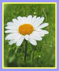 Ý nghĩa tranh thêu một số loài hoa