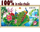 Hoa nở phú quý (khổng tước)-tranh thêu in mầu - tranh thêu chim công
