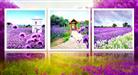 Cánh đồng Lavender lãng mạn (Tranh thêu chữ thập các loài hoa in màu)