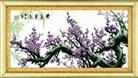 Xuân sang phước lành - hoa tím